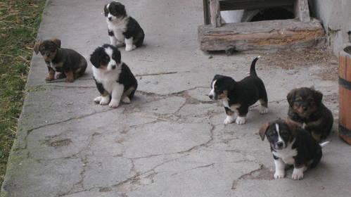 Hunde Günstig Abzugeben