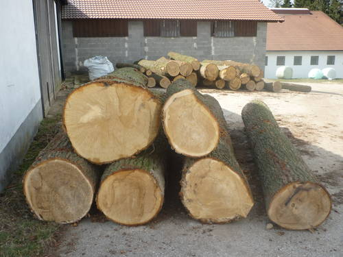 Etwas Neues genug Eiche Stammholz, Tischerlerholz &CE_18