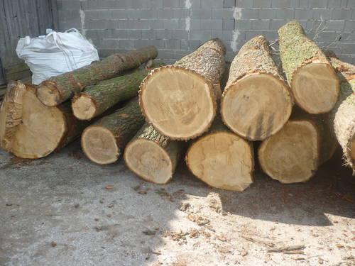 Super Eiche Stammholz, Tischerlerholz #GR_91