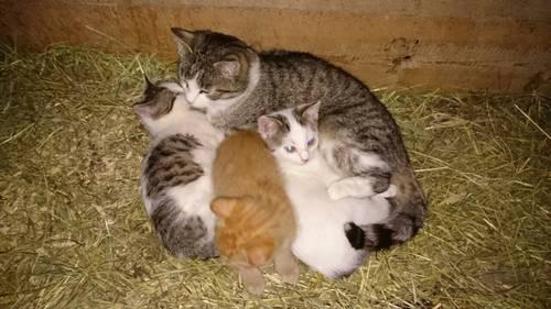 3 Stk. herzige Katzen zu verschenken