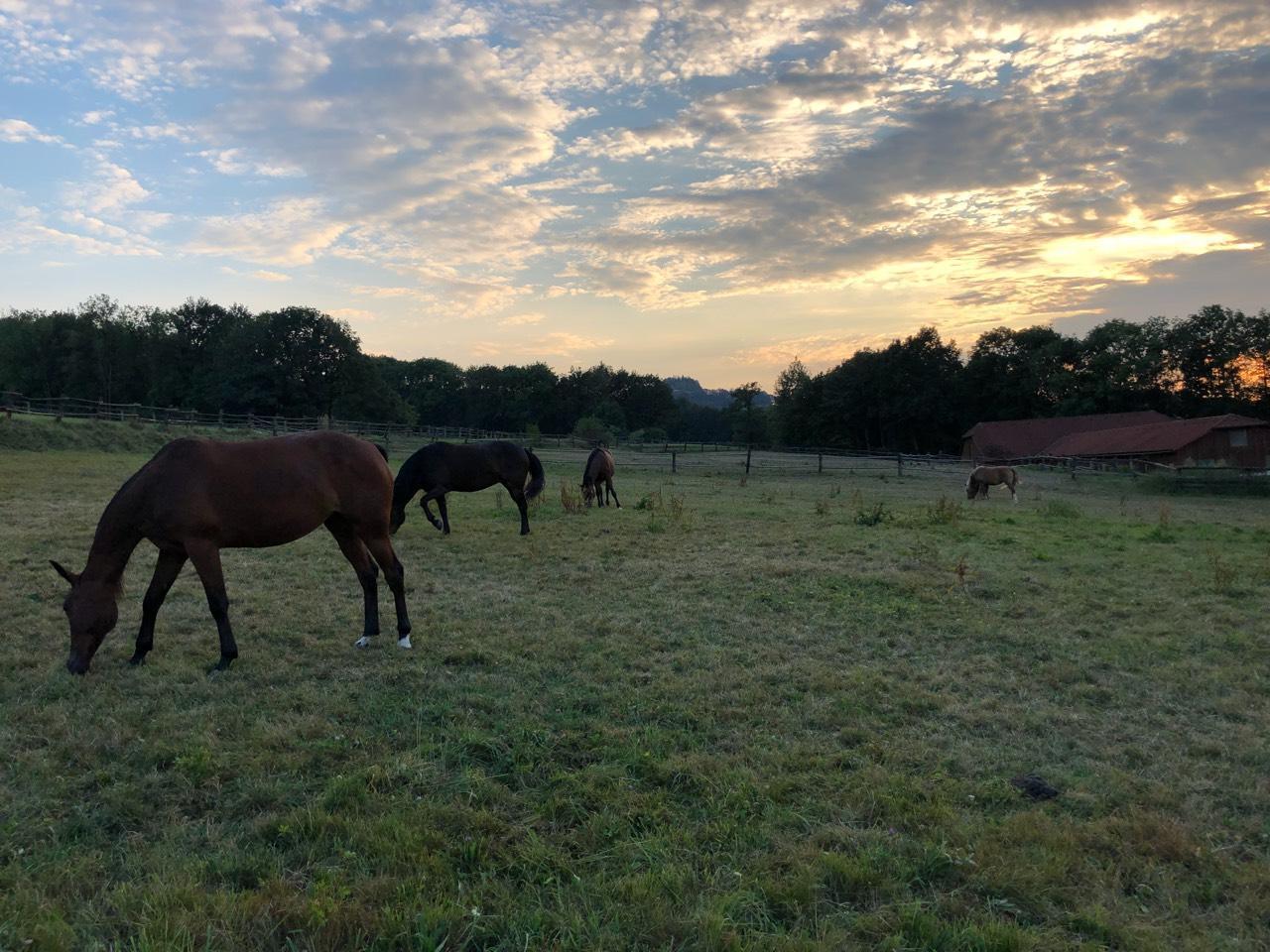 Einstellplatz Für Pferd Gesucht Wwwlandwirtcom