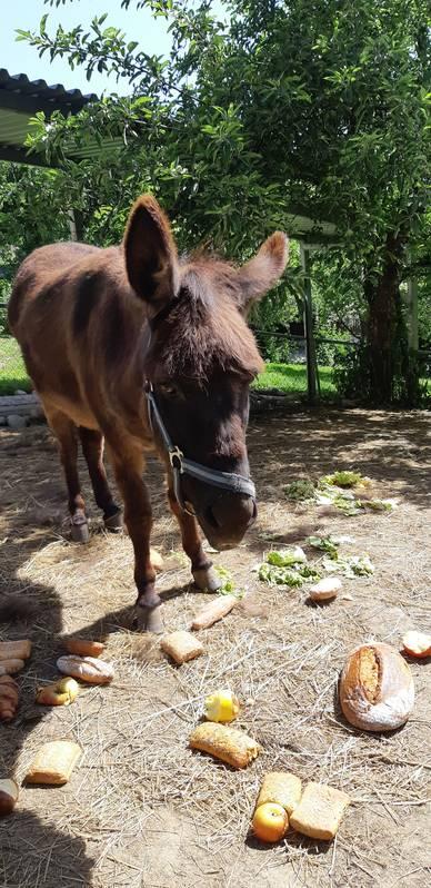Fabelhaft Esel kaufen - auf www.landwirt.com &DS_88