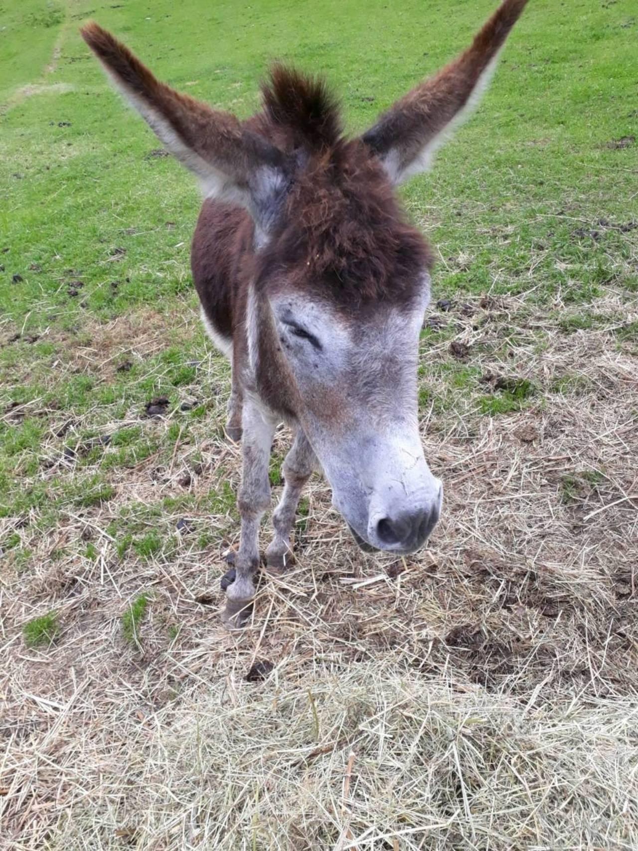 Fabelhaft Esel kaufen - auf www.landwirt.com @KG_41