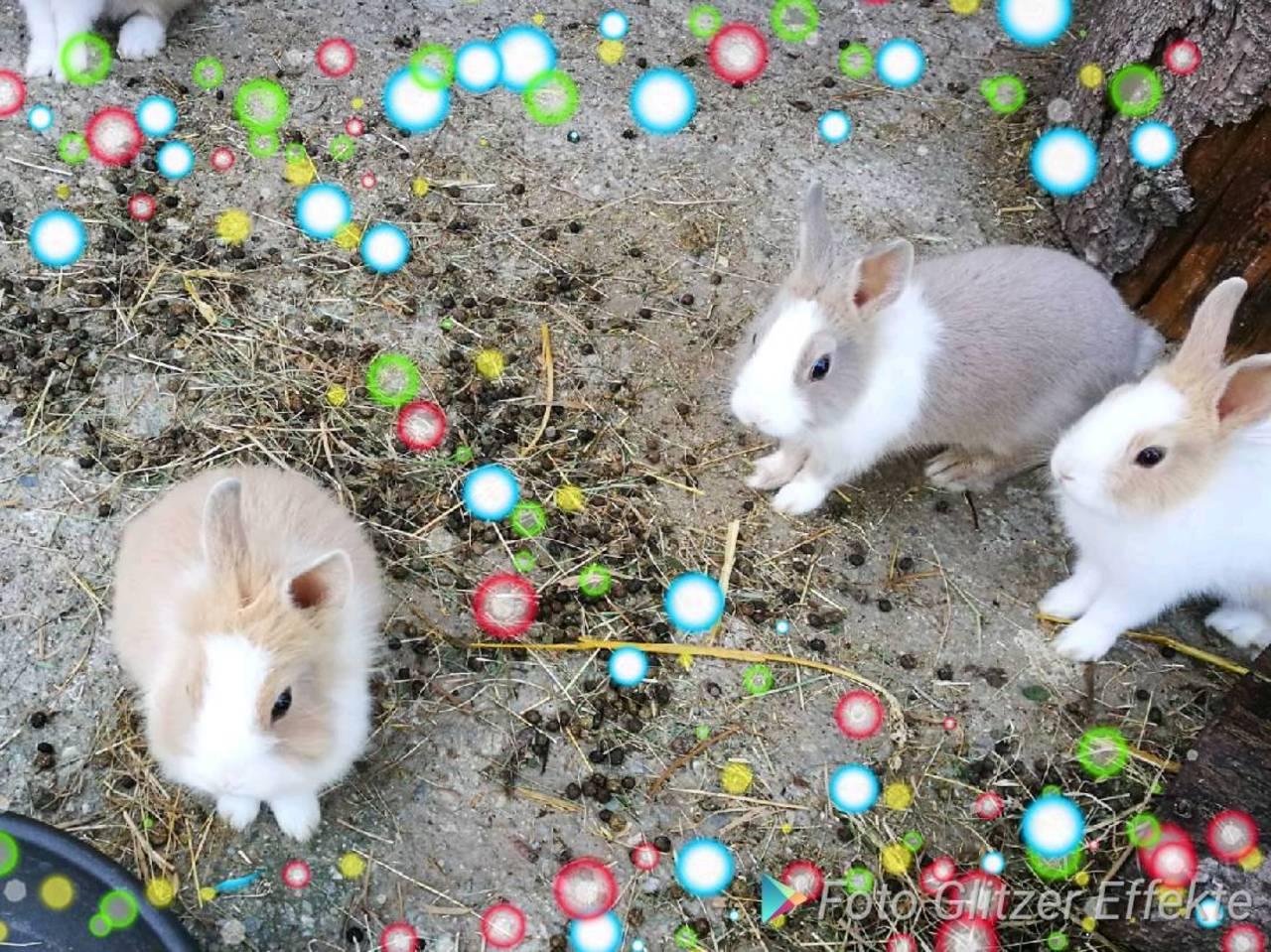 kaninchen kennenlernen)