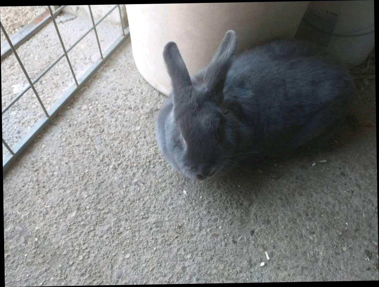 Kaninchen Hasen In Oberosterreich Kaufen