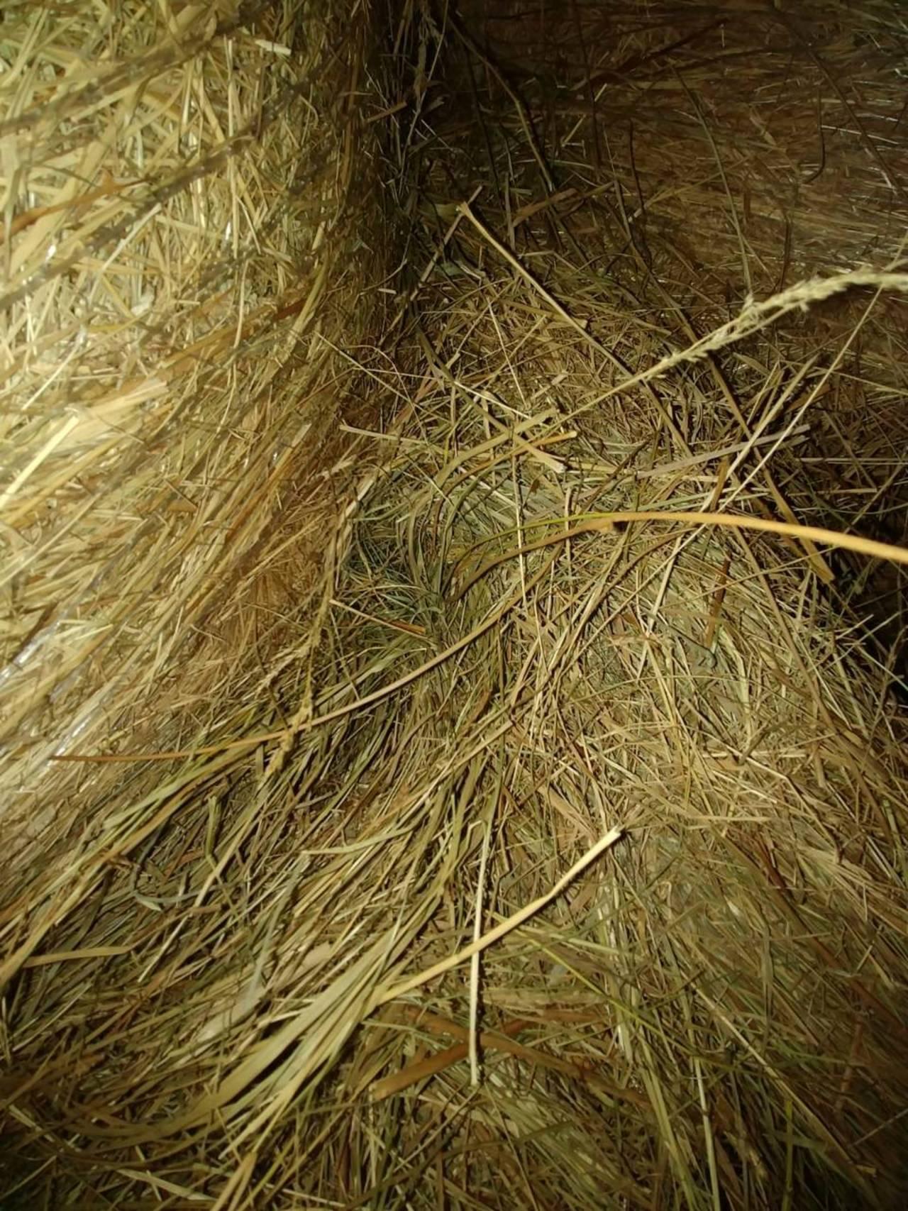 Fabelhaft Heu kaufen und verkaufen - auf www.landwirt.com @SN_58