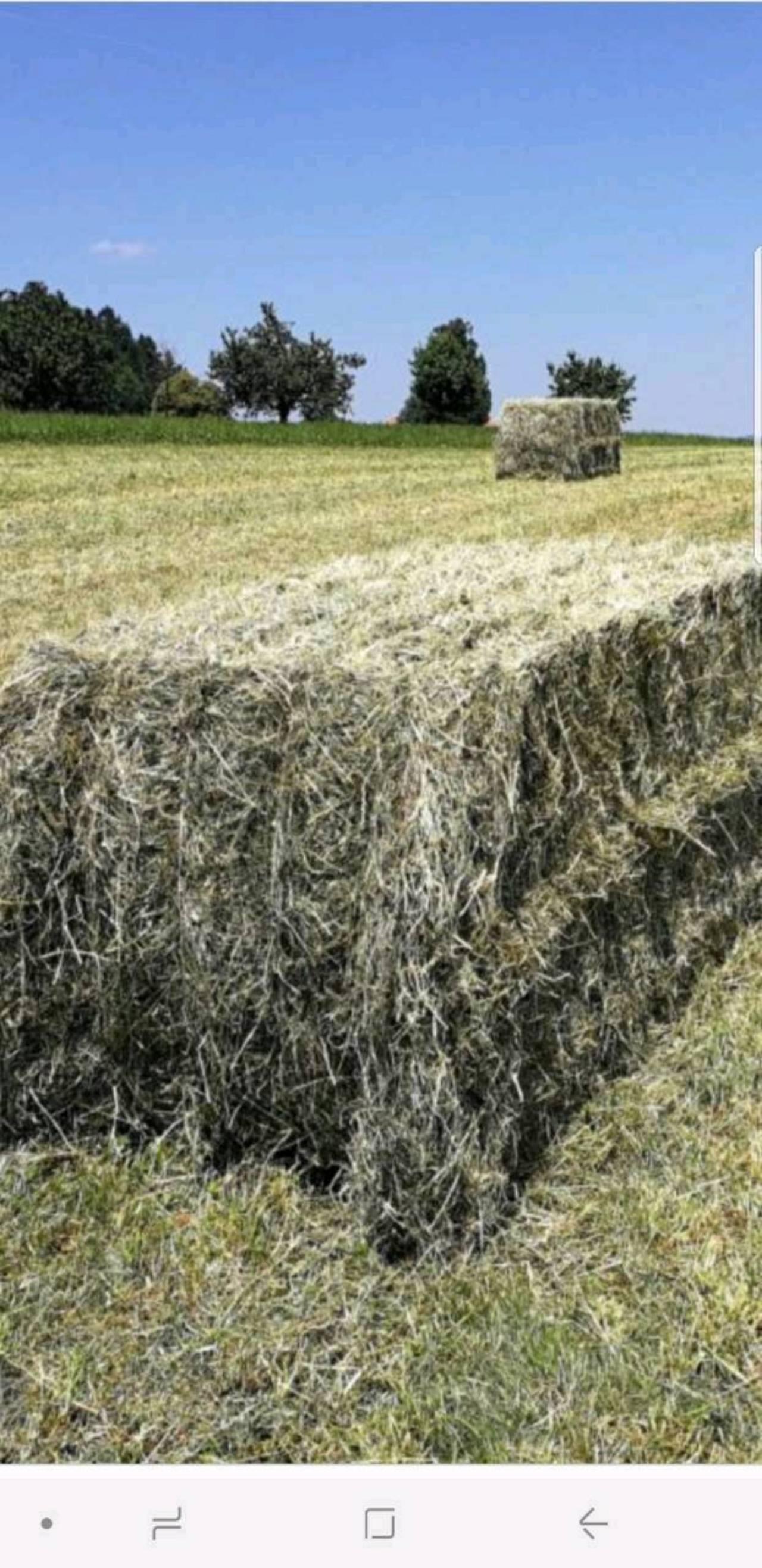 Geliebte Heu kaufen und verkaufen - auf www.landwirt.com &RF_12