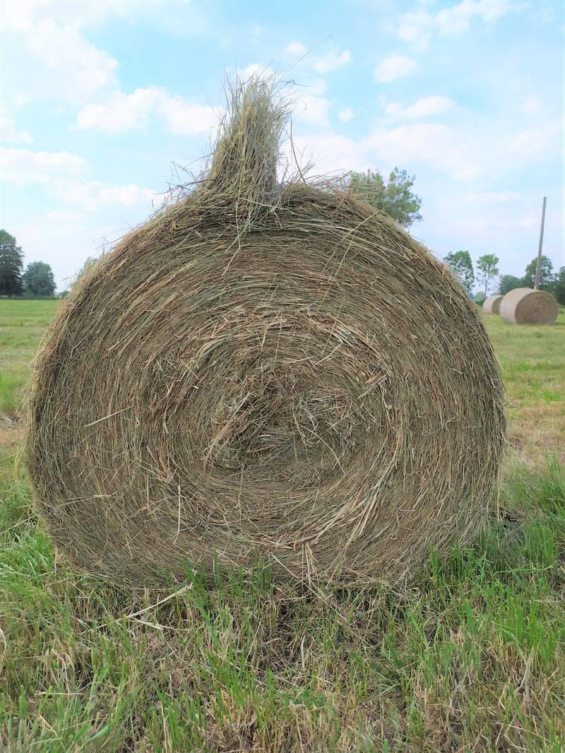 Beliebt Bevorzugt Heu kaufen und verkaufen - auf www.landwirt.com #CE_06