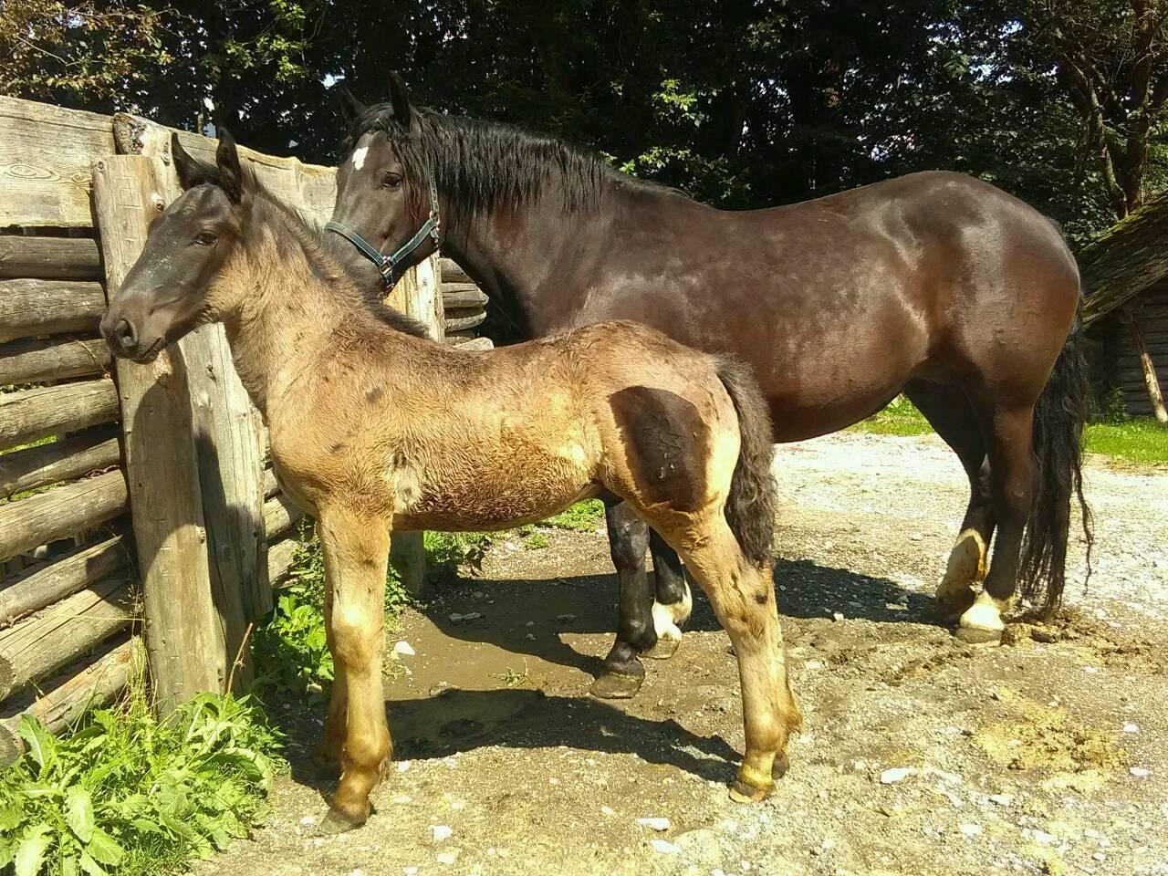 Pferde Kaufen Und Verkaufen Auf Www Landwirt Com
