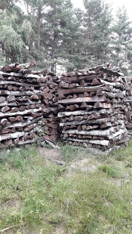 brennholz birke oder fichte