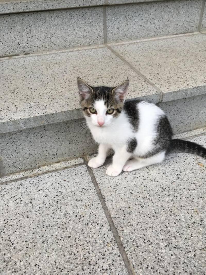 Katzenbabys: Zwei junge Katzen suchen ein neues Zuhause