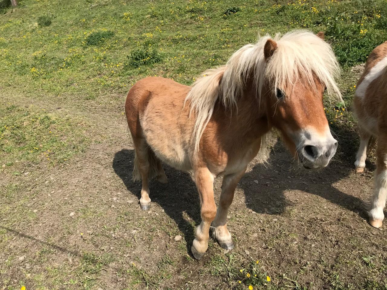 Pony Gunstig Kaufen Landwirt Com