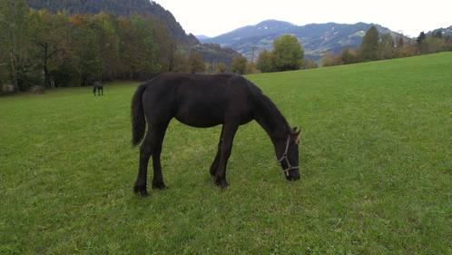 Nice v d das pferd ist sehr zutraulich und an kinder gewöhnt
