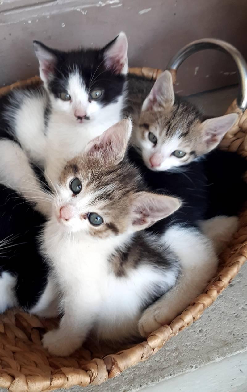 Katzenbabys: KATZENBABYS gebraucht kaufen - Landwirt.com