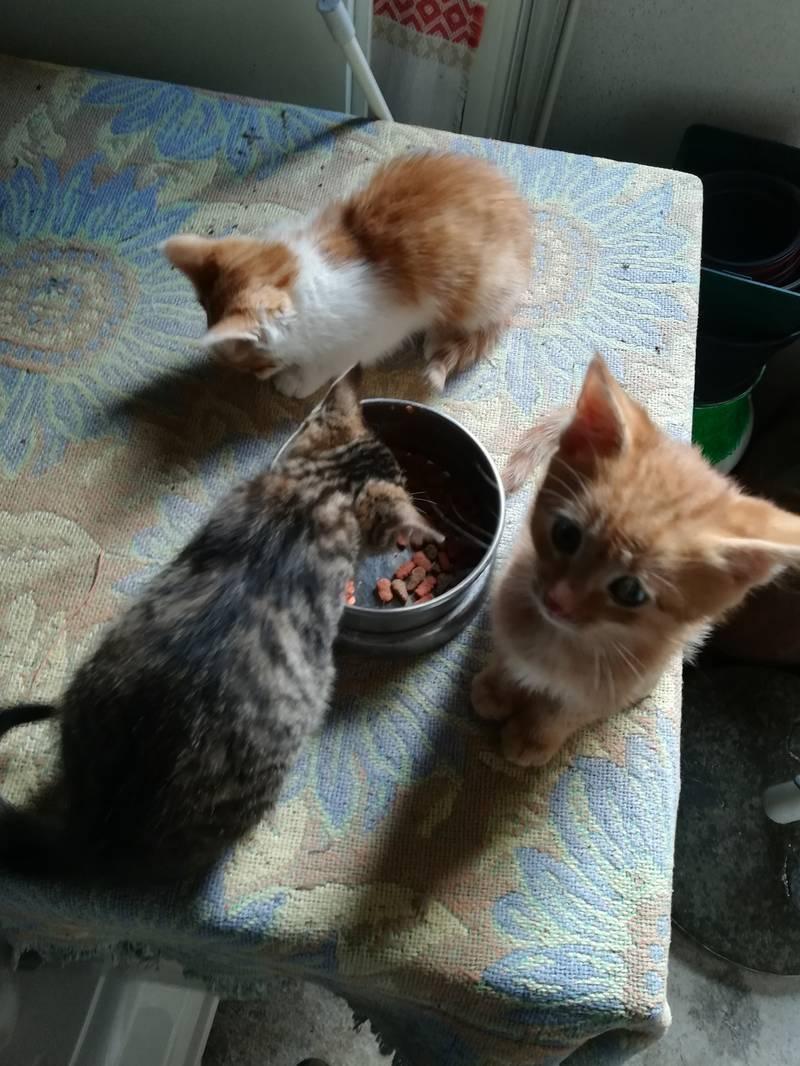 Katzenbabys: Katzen gebraucht kaufen - Landwirt.com