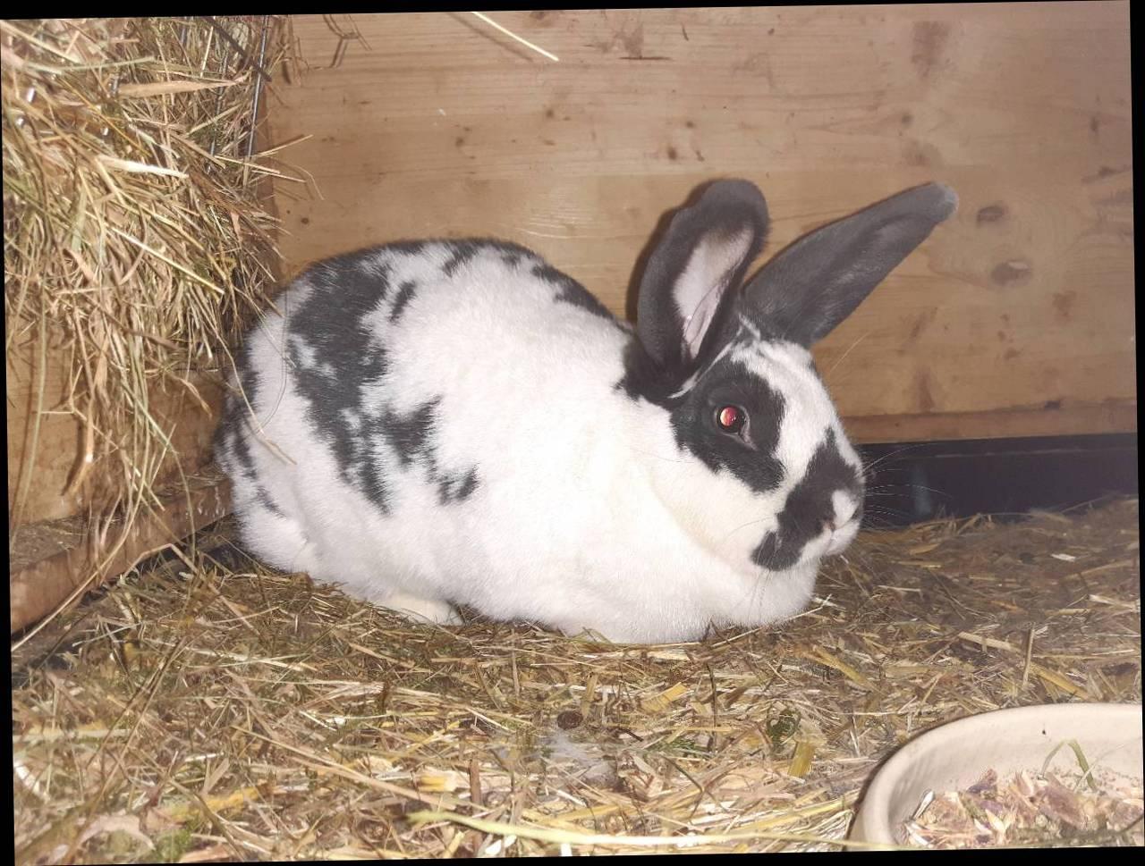 Kaninchen Abgeben