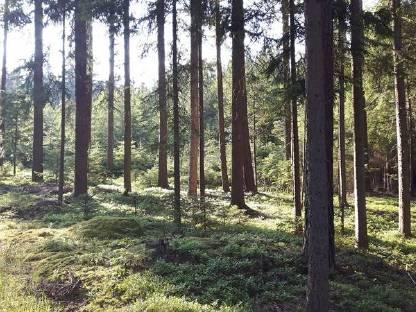 Waldgrundstück waldgrundstück im mühl waldviertel gesucht